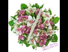 Корзина 25 Орхидей