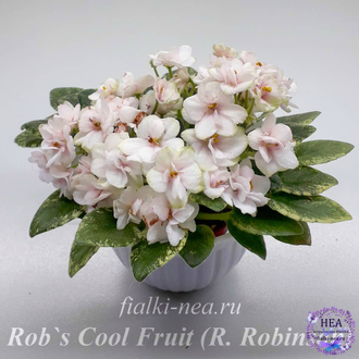Rob`s Cool Fruit (Робз Кул Фрут) (R. Robinson)