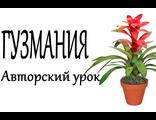 Гузмания из фоамирана, авторский он-лайн урок