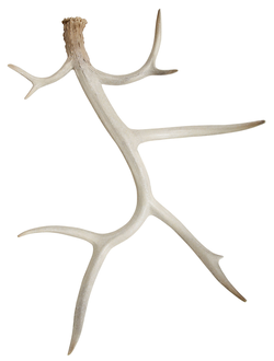 Рога декор DECORATIVE WALL ANTLER SOUBOI IVORY 49.8X18.8X60.5арт.31399