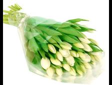 Белые 19 Тюльпанов