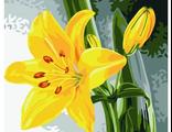 желтая лилия 30х40