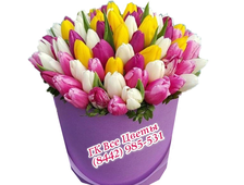Тюльпаны в коробке микс (51 тюльпан)