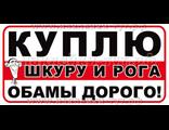 """Наклейки из серии """"Санкции. Путин"""" - Куплю шкуру и рога Обамы дорого! Наклейка на авто, от 30 рублей"""