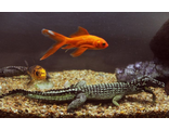 Товары для рыб и рептилий