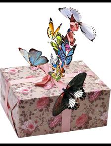 салют из 25 тропических бабочек