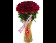 Супер длинные голандские бордовые розы Элита (1 метр-1,10 метра)