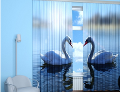 Фотошторы: Пара лебедей