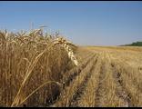 Купить земли сельскохозяйственного назначения