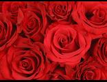 Розы высотой 150см