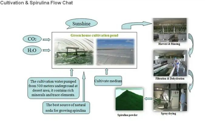 poduction and processing of spirullina How to create a successful advertisement if you know the basic format and proven techniques that are incorporated into every successful advertisement, writing a good.