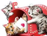 игривые котята 30х40