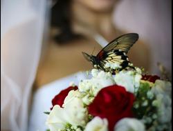 Живые бабочки на праздник (свадьбу, день рождения, корпоратив, фотосессию)