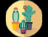 Купить подарочный набор веселых цветущих кактусов (праздничный предзаказ)