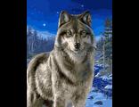 Картина раскраска по номерам Ночной дозор