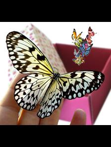 """Салют """"мини лайт """" из 11 бабочек."""