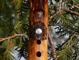 The forest flute in G