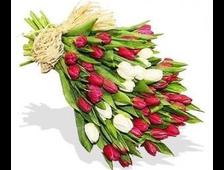 45 Тюльпанов букет Два Цвета