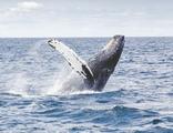 Танец кита