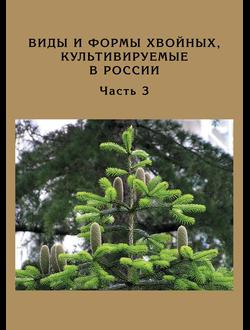 Виды и формы хвойных, культивируемых в России. Часть 3. Abies Mill., Chamaecyparis Spach