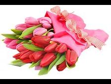 Букет из 25 Тюльпанов (цвет по желанию)