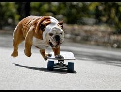 спортивная собака ( беговые дорожки и тренажеры)