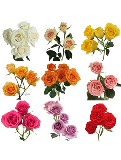 SprayRoses Mix70