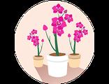 Купить комнатный мини-сад орхидей (праздничный предзаказ)