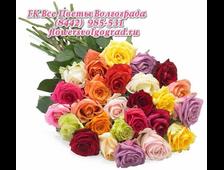 23 розовой розы
