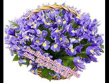 Корзина Ирисов 51-101 голубой Ирис