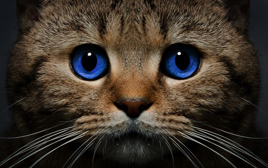 Картинки кошка на рабочий стол