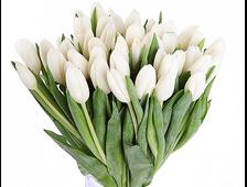 Букет белых тюльпанов (35 шт.)