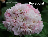 Dovepoint