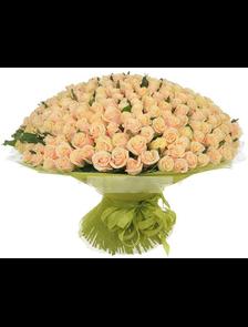 303 кремовые розы