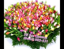Большая корзина Тюльпанов 301 Тюльпан/501 Тюльпан/1001 Тюльпан