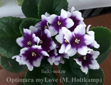 Optimara myLove  02/28/2014 (M. Holtkamp)
