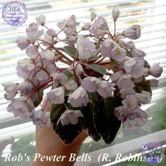 Rob's Pewter Bells 07/06/1992 (R. Robinson)