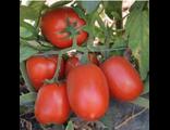 Семена  гибридов овощей