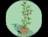 Купить комнатный бамбуковый мини-садик в подарок (праздничный предзаказ)