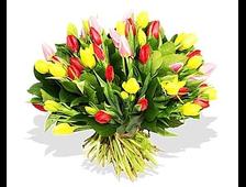 41 Тюльпан цветной Радужные Миксы