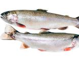 Рыба северных пород