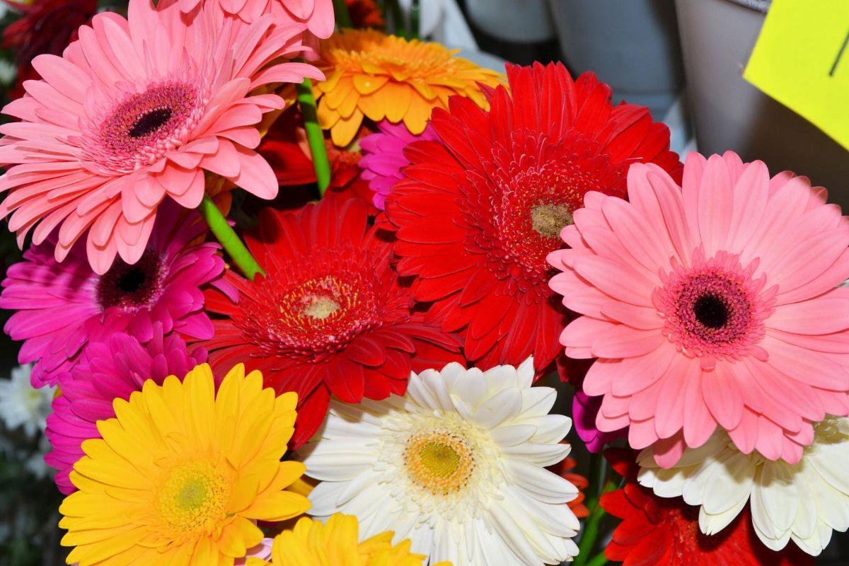 Доставка цветов камень на оби алтайский край, букет невесты с бордовыми цветами фото