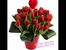 35 красных тюльпанов в подарочном ведерке