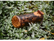 Wooden ocarina in C#