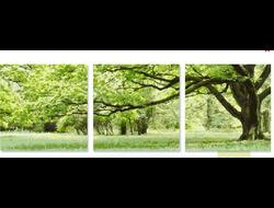 "Картина раскраска по номерам ""Ветвистое дерево"" триптих 5050 см 3 шт."