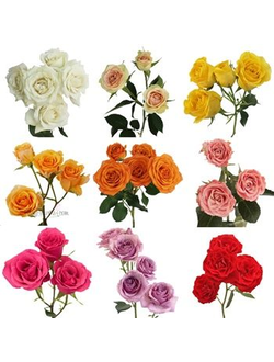 SprayRoses Mix50