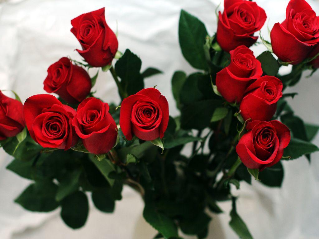 Открытки цветы розы фото картинки открытки