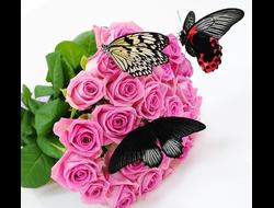ЗАКАЖИ салют из живых бабочек на любой праздник