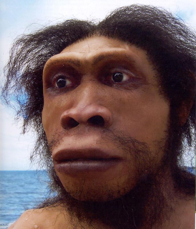 Homo erectus face