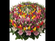 301 Тюльпан/501 Тюльпан в корзине
